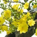 Phấn đấu tạo mùa xuân