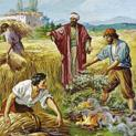 24/07 Hãy cứ để cả hai mọc lên cho đến mùa gặt