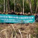 Rừng thông Đan viện Thiên An: cần được bảo vệ nguyên trạng