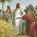 17/7 Con Người cũng là chủ ngày sabbat