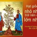 17/06 Nước Thiên Chúa phát triển