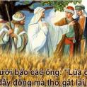 07/7 Lúa chín đầy đồng mà thợ gặt thì ít