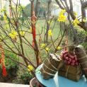 Đức Thánh Cha Phanxicô chúc mừng Năm mới âm lịch