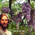 Để sinh trái phải kết hợp với cây Giêsu
