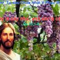 17/05 Ai ở trong Thầy, và Thầy ở trong người ấy, kẻ ấy sẽ sinh nhiều trái